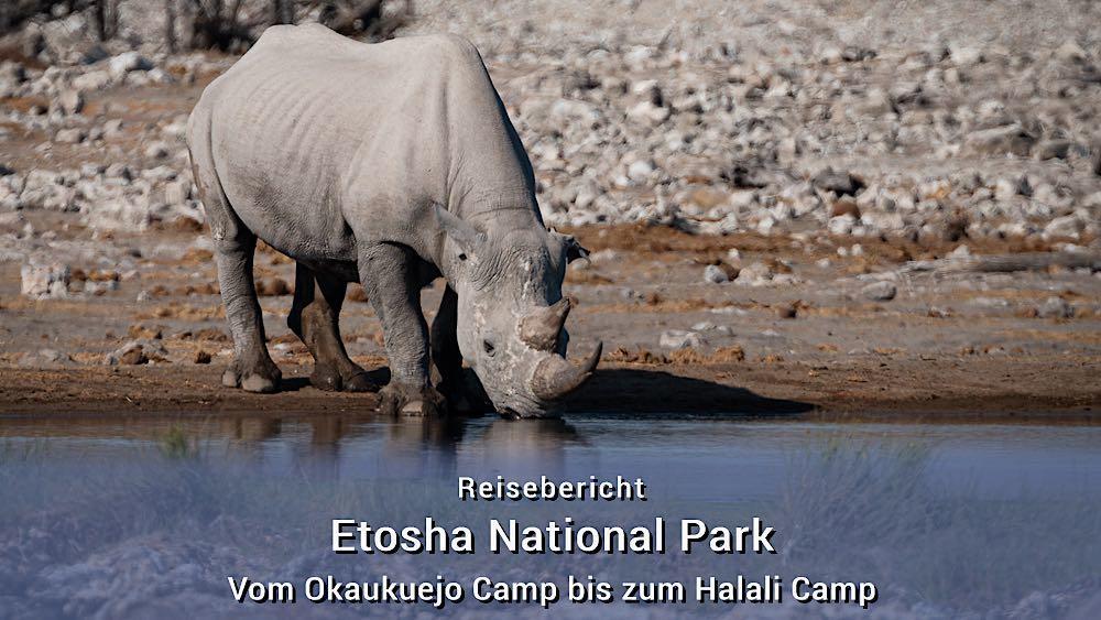 Etosha Tierfotos: Vom Okaukuejo Camp bis zum Halali Camp