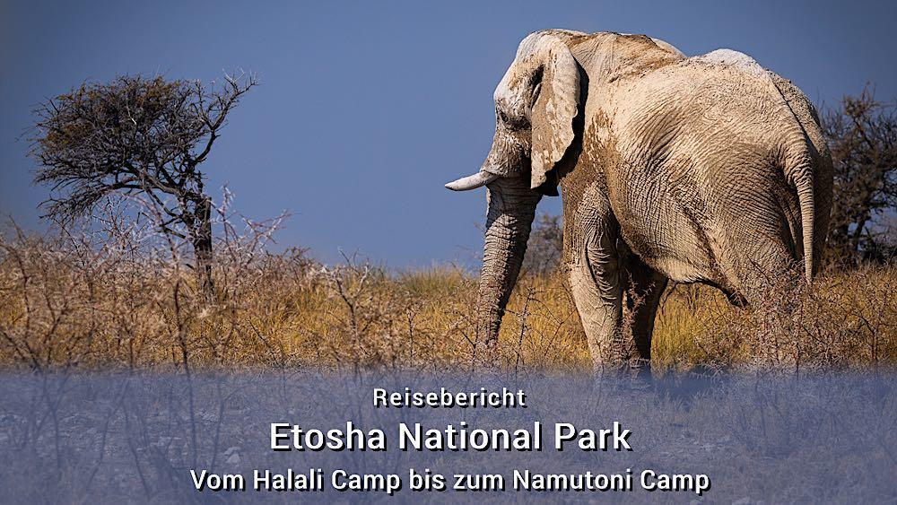 Etosha Tierfotos: Vom Halali Camp bis zum Namutoni Camp