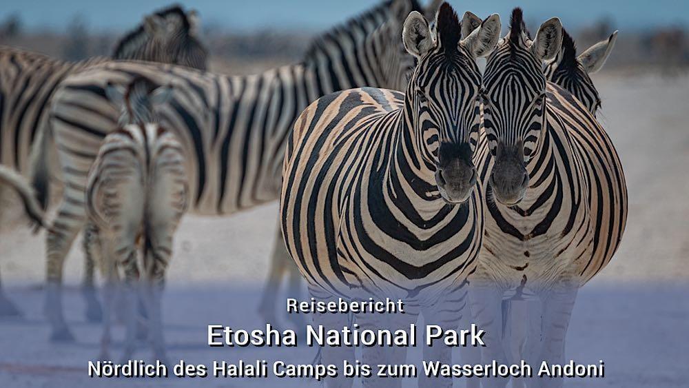 Etosha Tierfotos: Nördlich des Halali Camps bis zum Wasserloch Andoni
