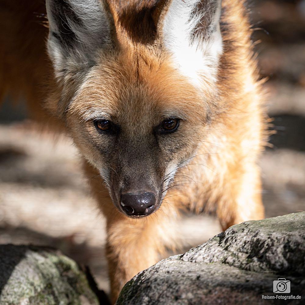 Zoo Dortmund mit der neuen Canon
