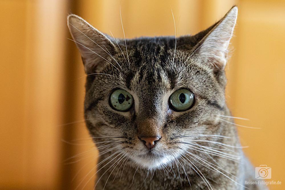 Unsere Katze Claire - Testaufnahme mit der Canon 5D Mark IV