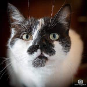 Unsere Katze Jerry - Testaufnahme mit der Canon 5D Mark IV