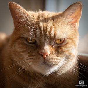 Unsere Katze Rocky - Testaufnahme mit der Canon 5D Mark IV