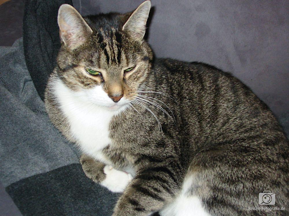 Tiger von 2002