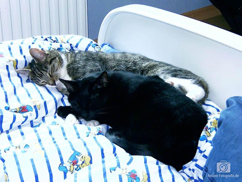 Gescanntes Foto von 2002 - Tiger und Fips