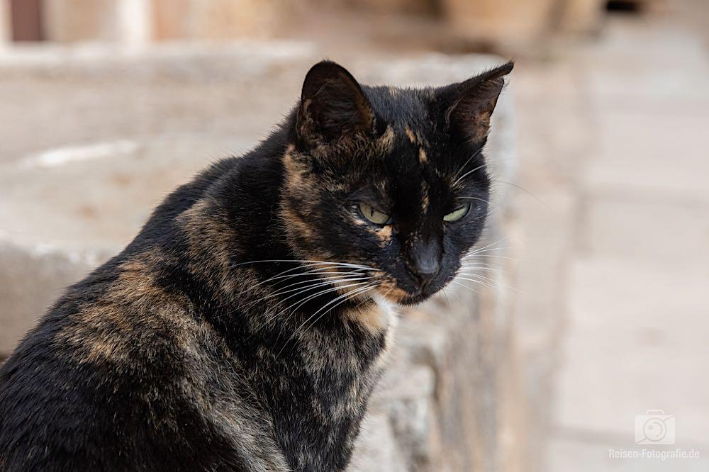 Katzen auf Kreta