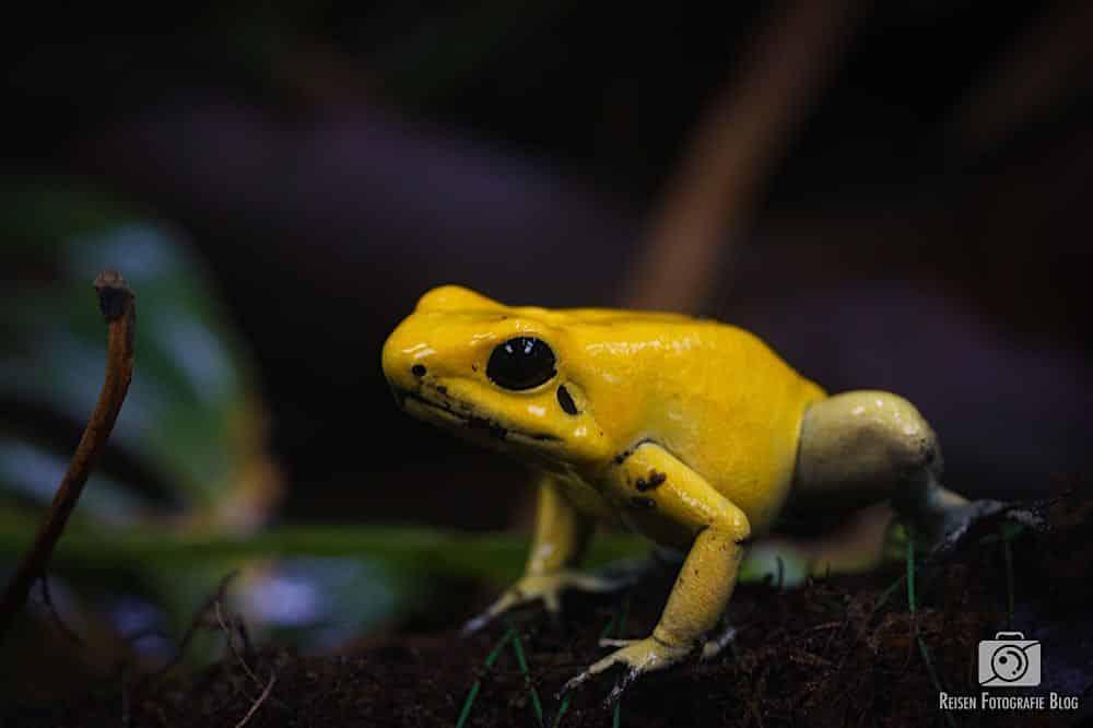 Kleiner Frosch, ganz groß