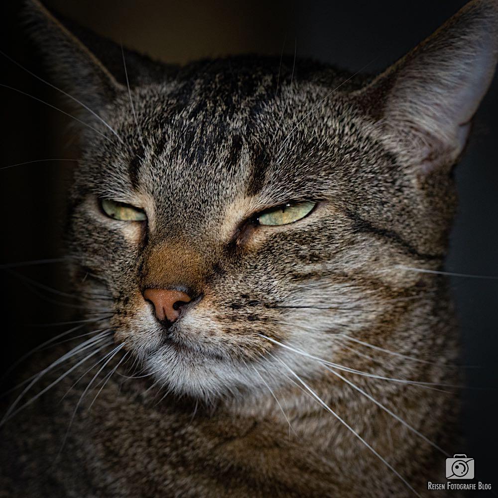 Claire als Grumpy Cat