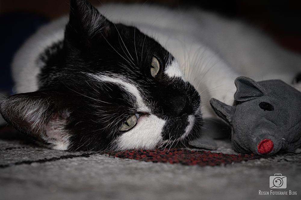 Entspannen mit der Maus
