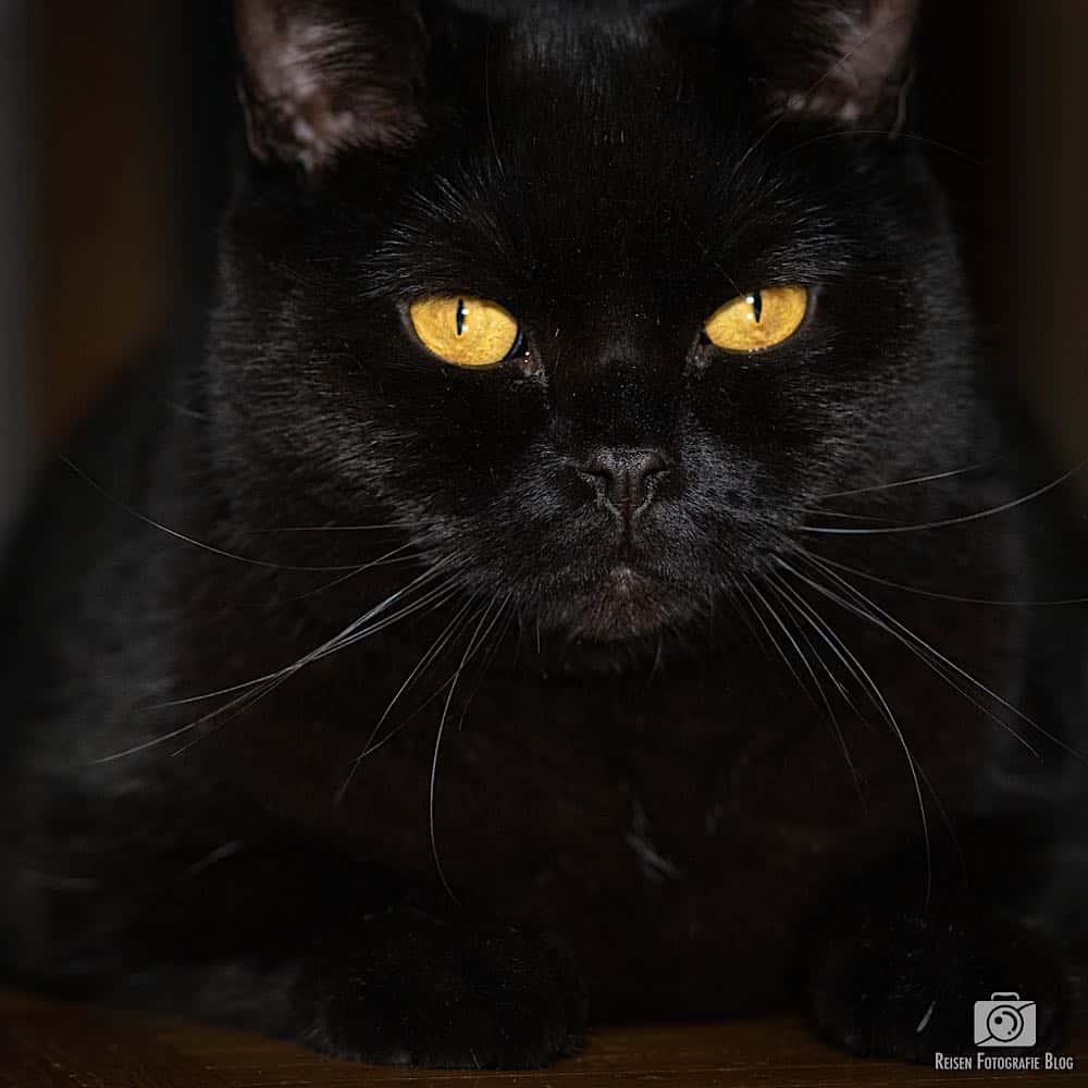 Jimmy - diese Augen