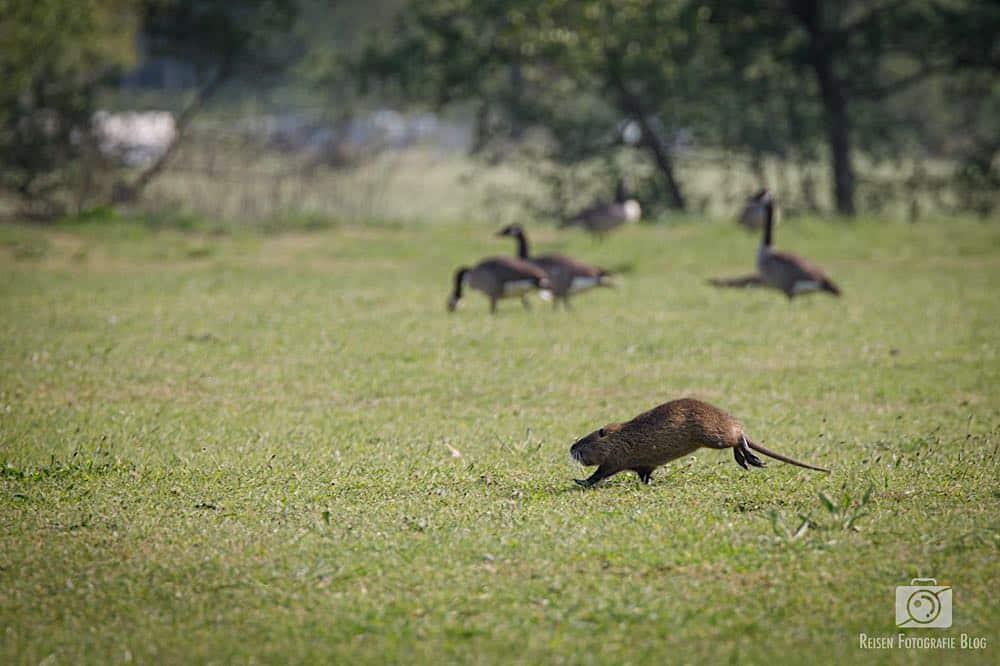 Tiere an der Ruhr