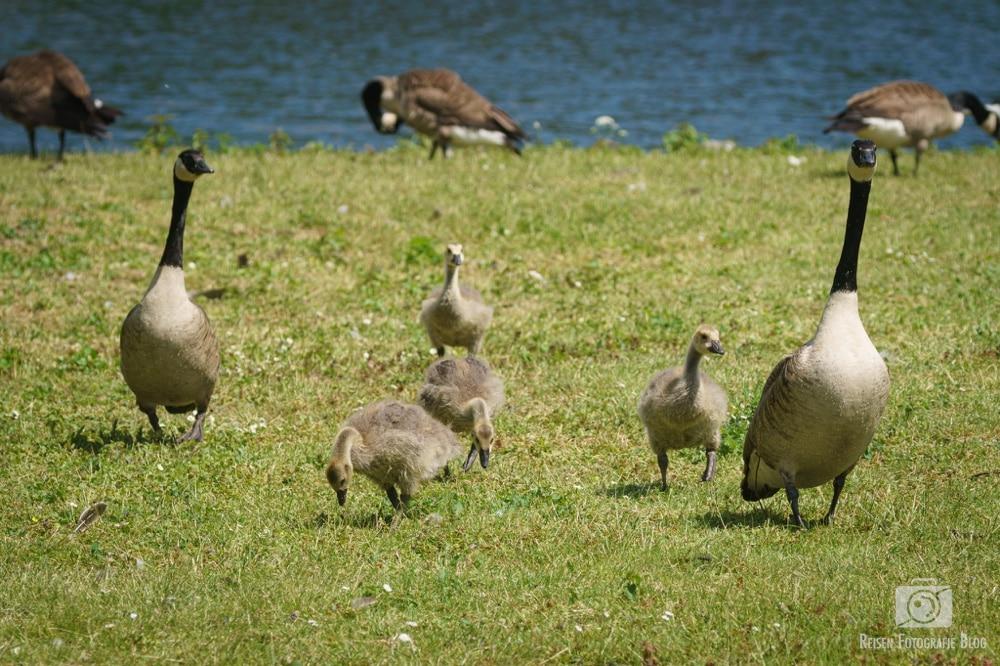 Tiere an der Ruhr - Mai 2020