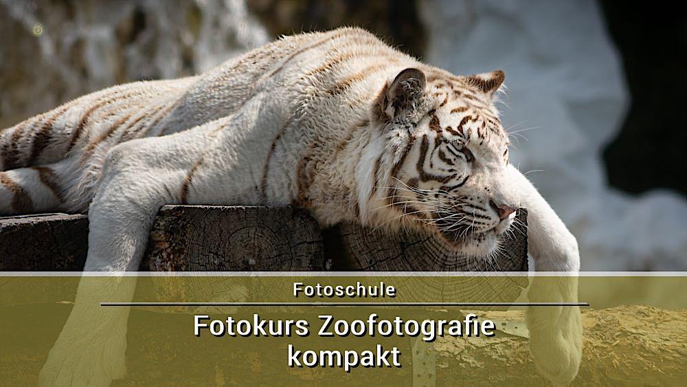 Fotokurs Zoofotografie