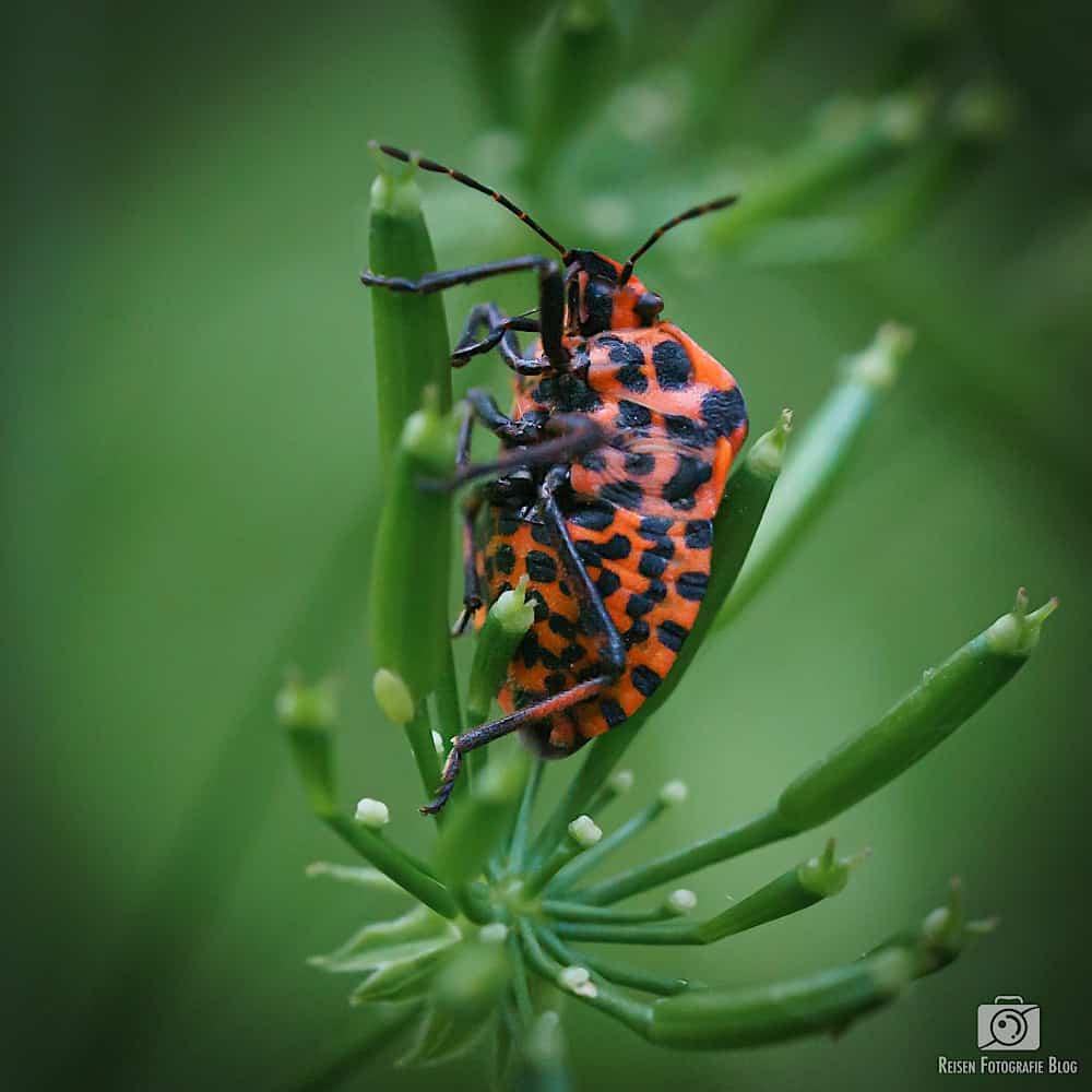 Insektenfotos Spaziergang Bismarckturm