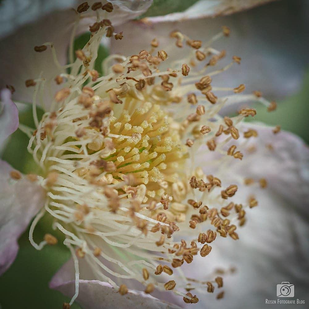 blog1-2020-06-07-insekten-24
