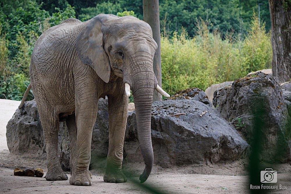 blog1-2020-06-08-zoo-duisburg-12