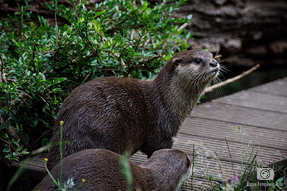 blog1-2020-06-08-zoo-duisburg-13