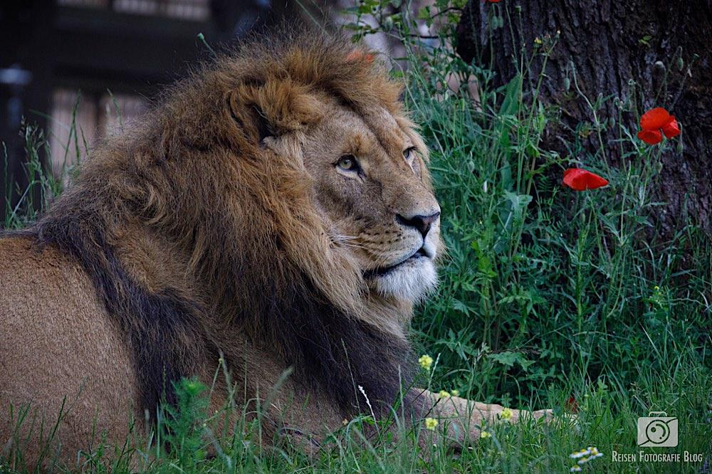 blog1-2020-06-08-zoo-duisburg-15