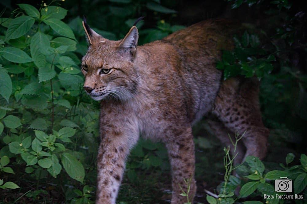 blog1-2020-06-08-zoo-duisburg-16