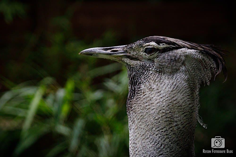 blog1-2020-06-08-zoo-duisburg-18