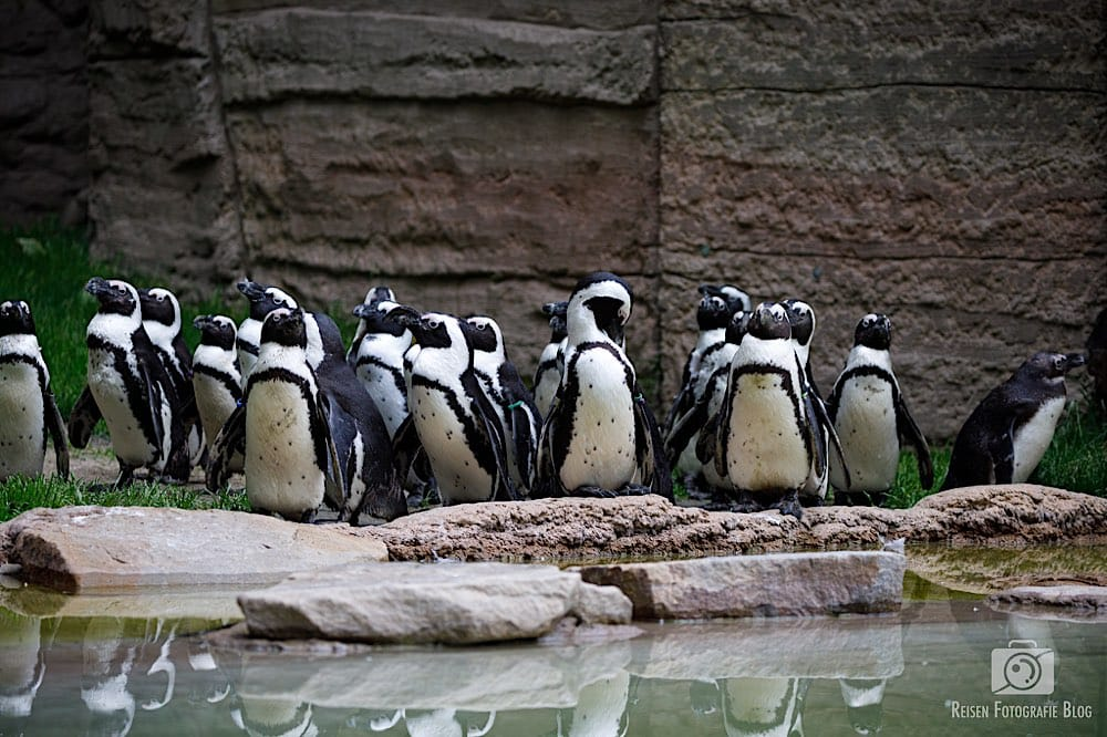 blog1-2020-06-08-zoo-duisburg-22
