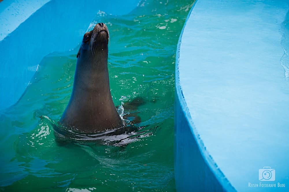 blog1-2020-06-08-zoo-duisburg-23