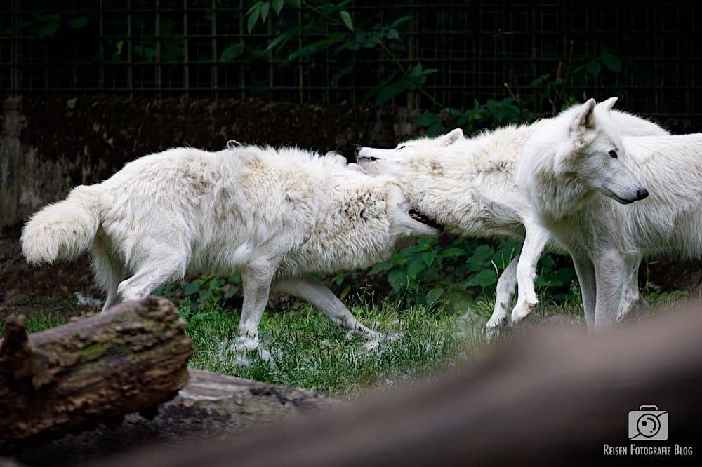 blog1-2020-06-08-zoo-duisburg-25