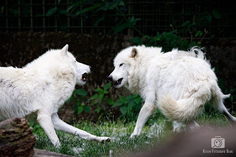 blog1-2020-06-08-zoo-duisburg-26