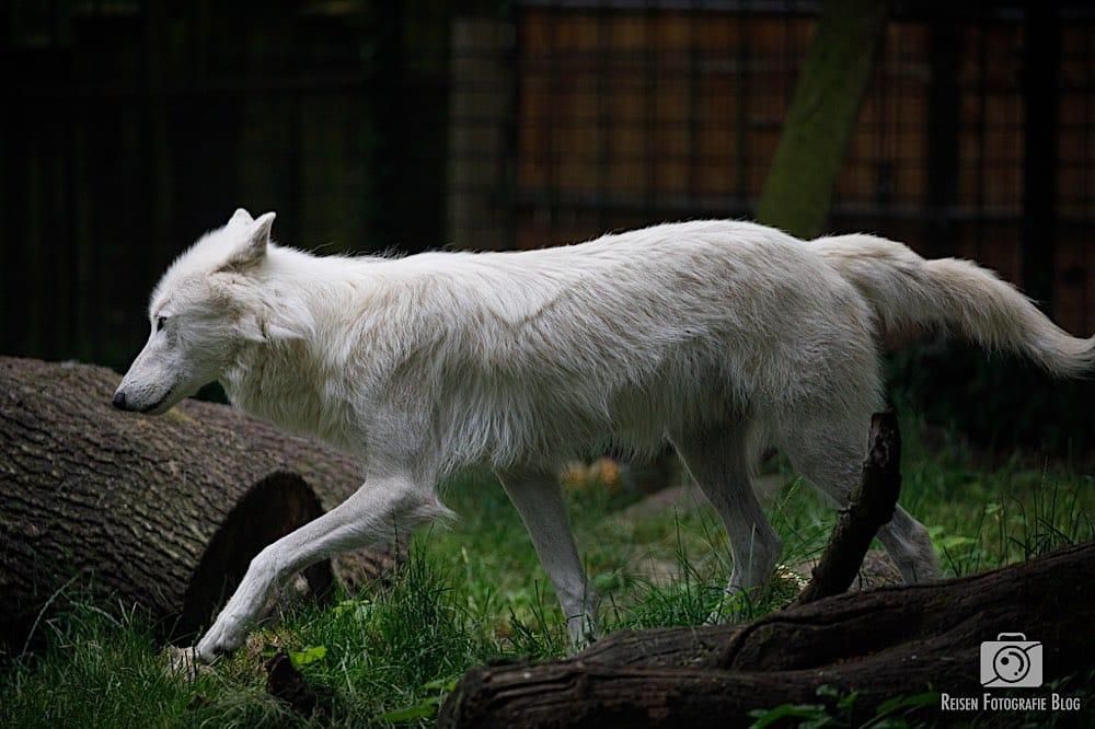 blog1-2020-06-08-zoo-duisburg-28