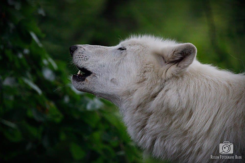 blog1-2020-06-08-zoo-duisburg-32