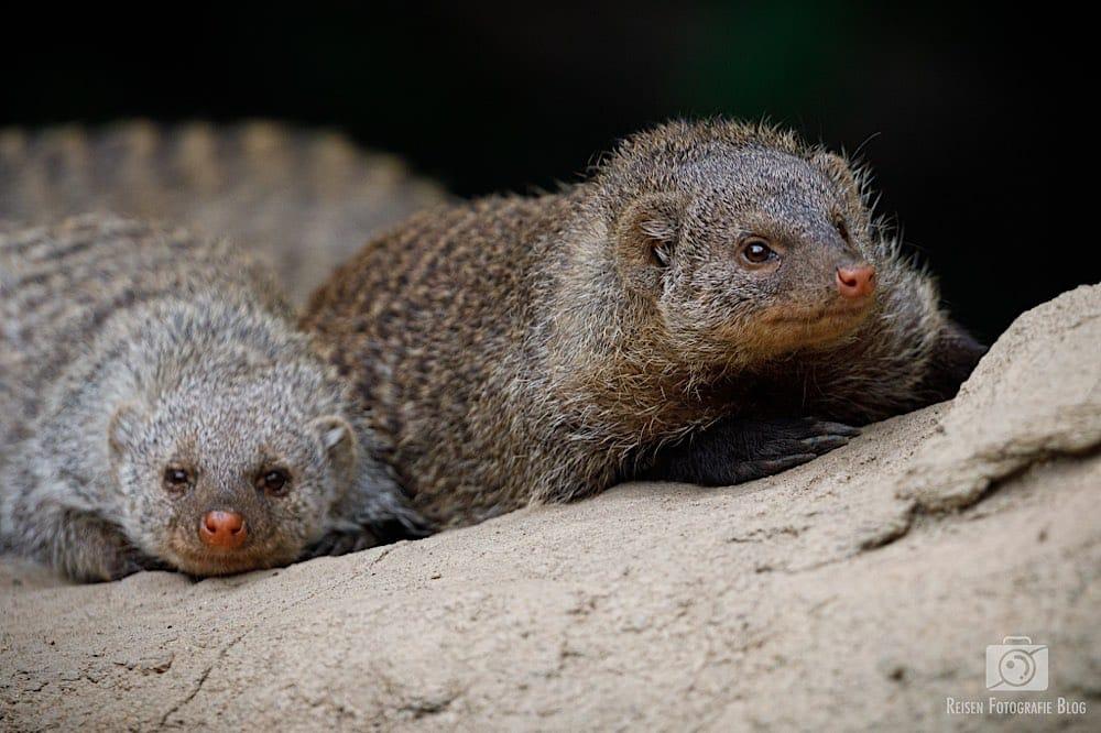 blog1-2020-06-08-zoo-duisburg-37