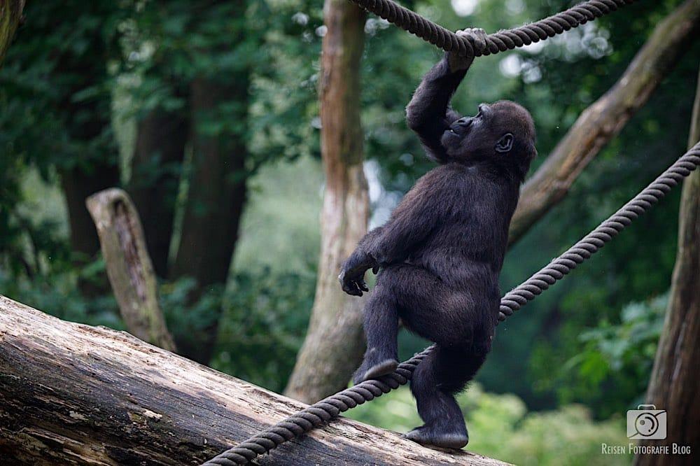 blog1-2020-06-08-zoo-duisburg-40