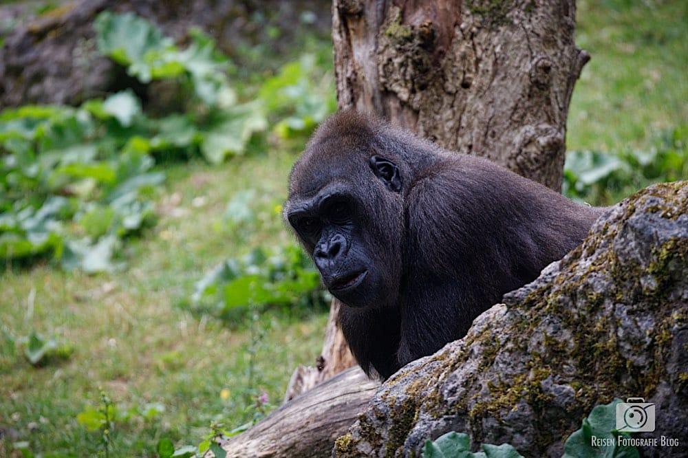 blog1-2020-06-08-zoo-duisburg-41