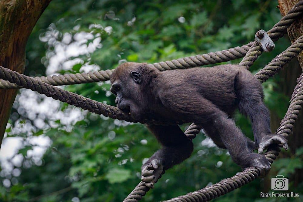 blog1-2020-06-08-zoo-duisburg-42