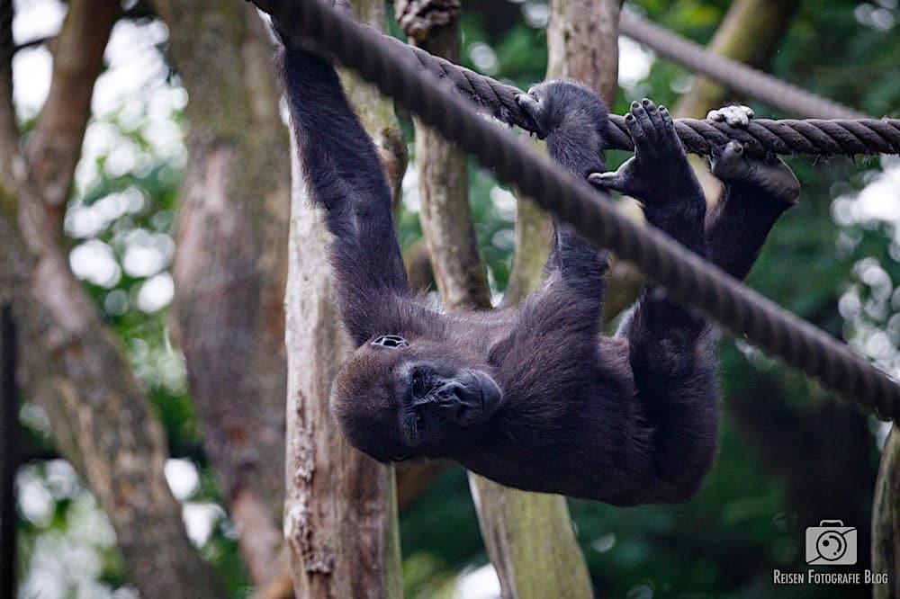 blog1-2020-06-08-zoo-duisburg-43