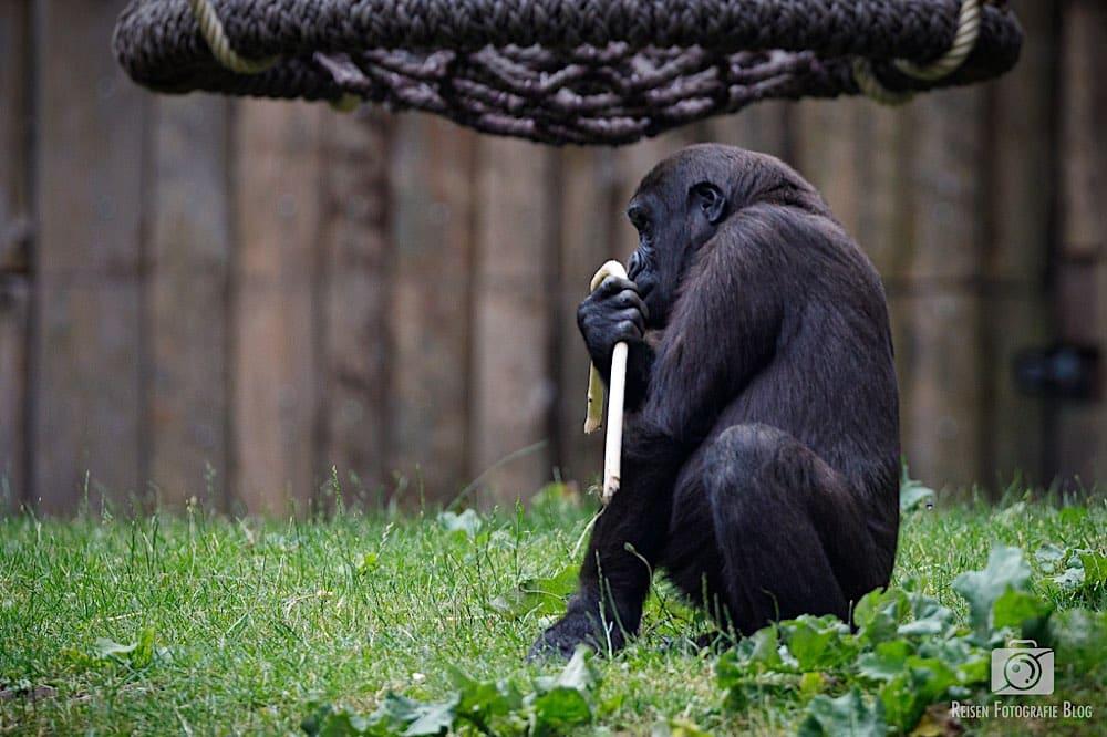 blog1-2020-06-08-zoo-duisburg-44
