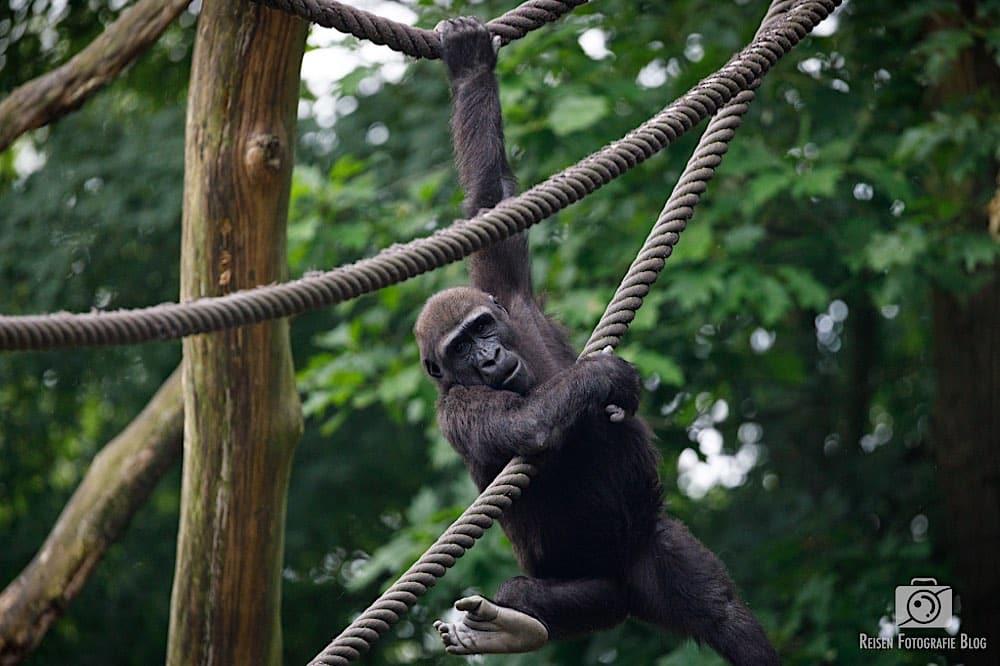 blog1-2020-06-08-zoo-duisburg-46