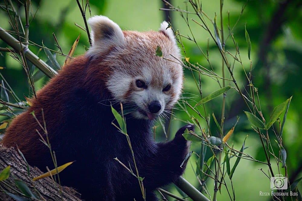 blog1-2020-06-08-zoo-duisburg-47