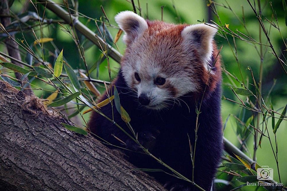 blog1-2020-06-08-zoo-duisburg-48