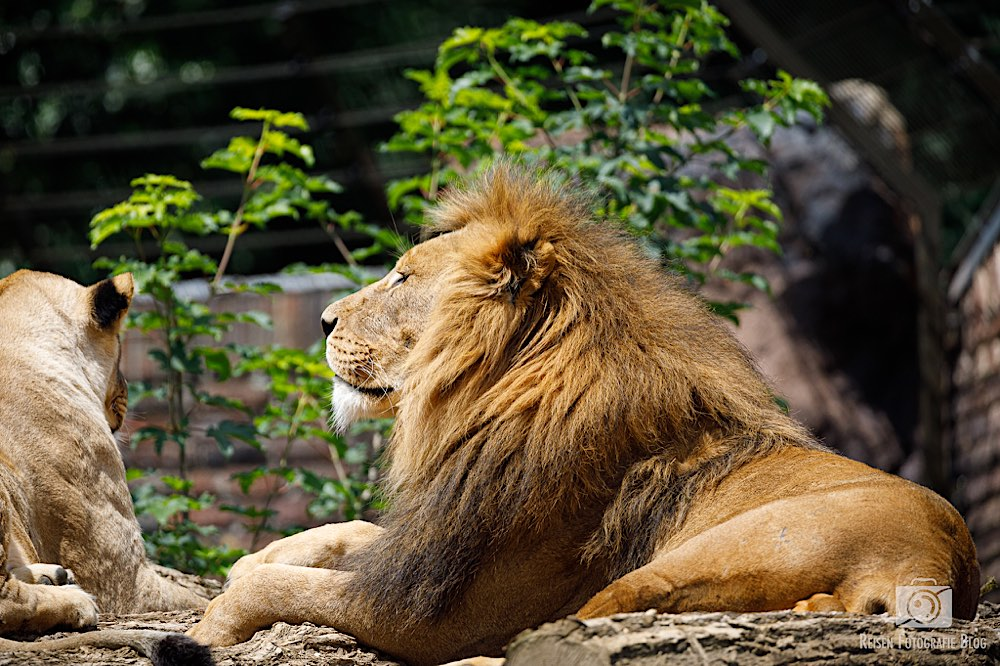 blog1-2020-06-08-zoo-duisburg-49