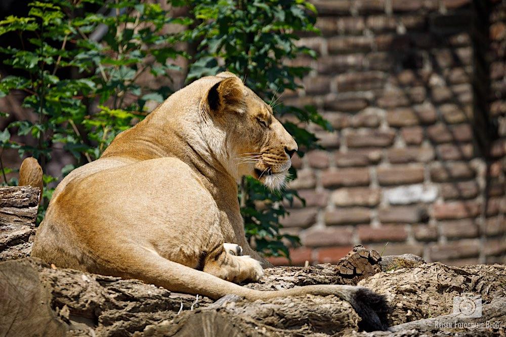 blog1-2020-06-08-zoo-duisburg-50