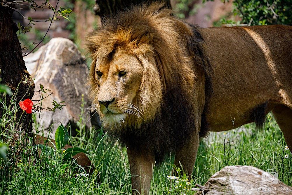 blog1-2020-06-08-zoo-duisburg-51