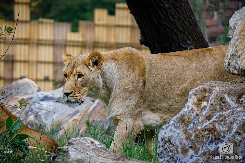 blog1-2020-06-08-zoo-duisburg-52
