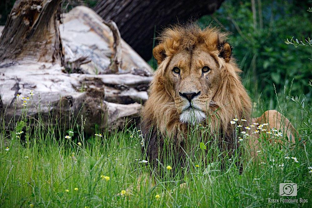 blog1-2020-06-08-zoo-duisburg-53