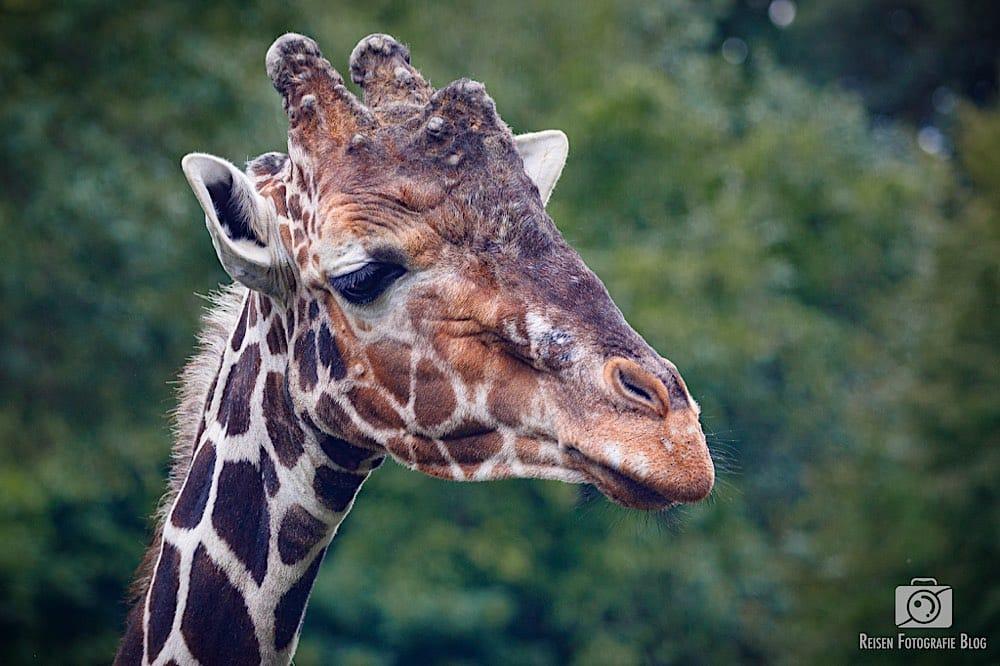 blog1-2020-06-08-zoo-duisburg-54