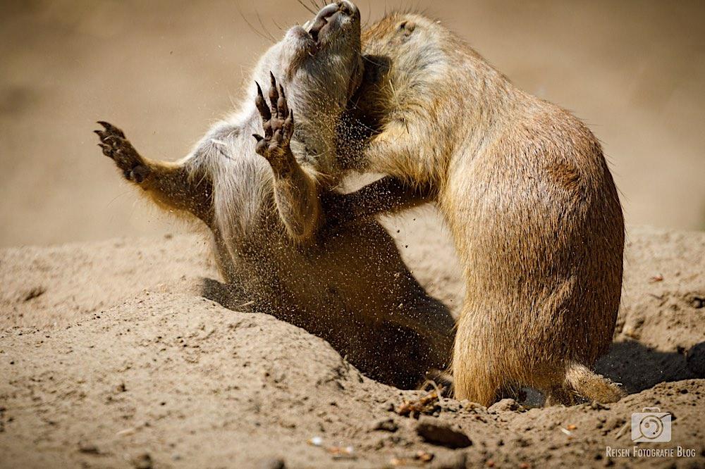 Klopf mir mal auf den Rücken, Aua, klopfen, nicht hauen!