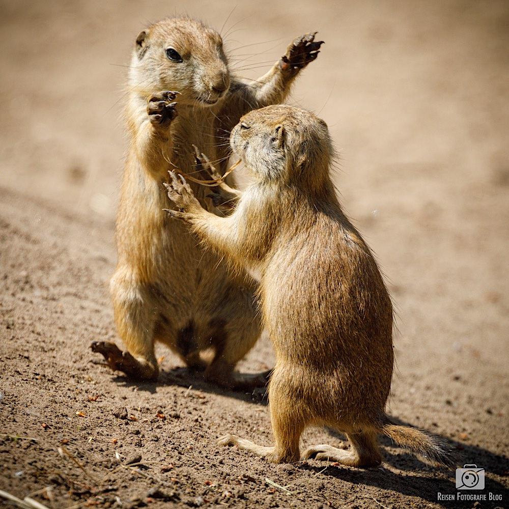 Und wenn ich groß bin, dann werde ich ein Bär!