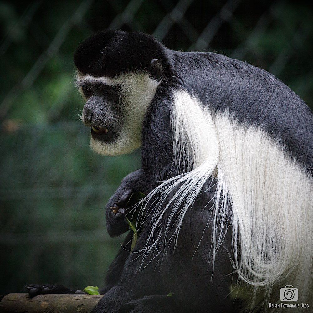 Zoo Krefeld 06-2020