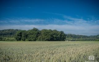 Felder in den Ruhrauen
