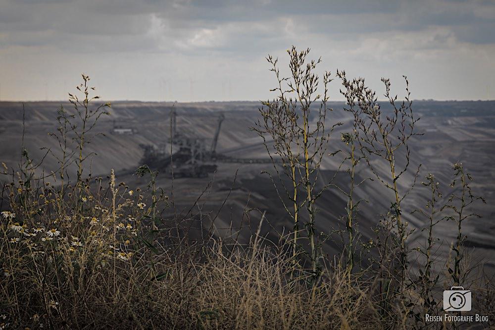 Natur kämpft am Tagebau Garzweiler